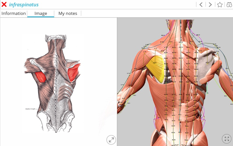 Visual Acupuncture 3D скриншот программы 4