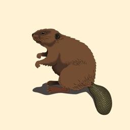Best Beaver Stickers