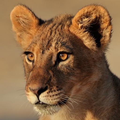 Wild Cats Sounds iOS App