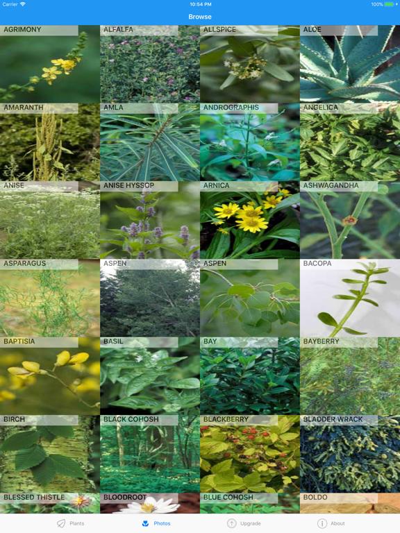 iPlant with Brigitte Mars: A Wild Plant Field Guide screenshot