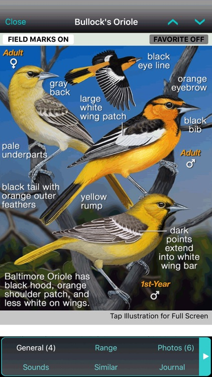 iBird Plus Guide to Birds