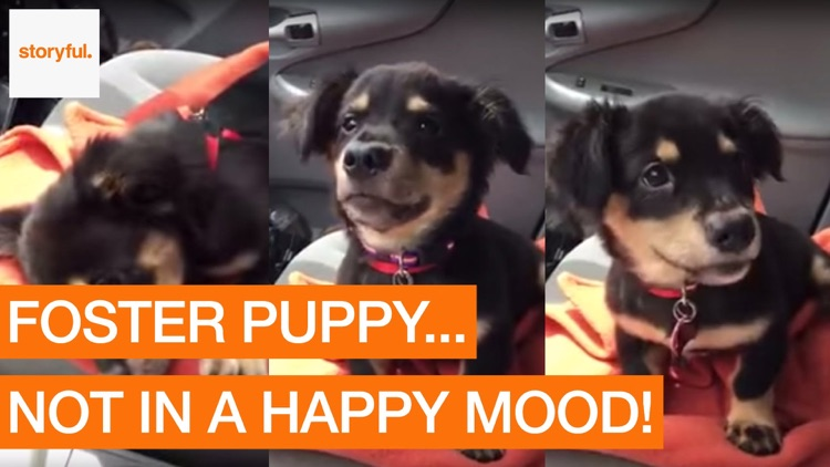 Storyful Dog Clips