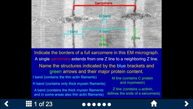 Histology - Basic Tissues screenshot-4