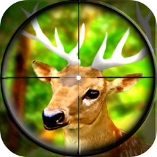 Activities of Forest Wild Animal - Hunting 3