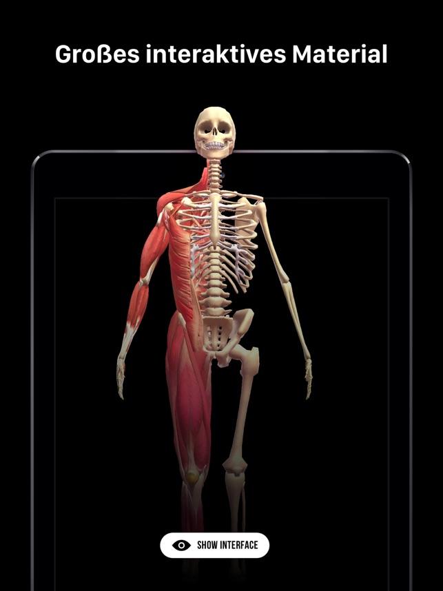 Tolle 3d Menschlichen Anatomie Modell Bilder - Menschliche Anatomie ...