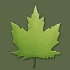 Arbres et arbustes en poche