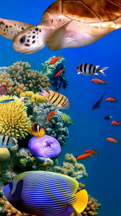 Sea Animals Emojis