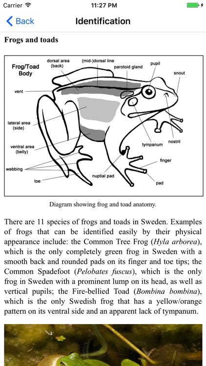 Reptiles and Amphibians of Sweden screenshot-4