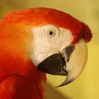 Codes for Birds Quiz - Birding Trivia Hack