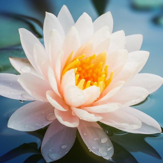 Citaten Van Filosofen : Wijsheid van boeddha in de app store