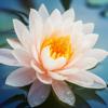 Weisheit des Buddha