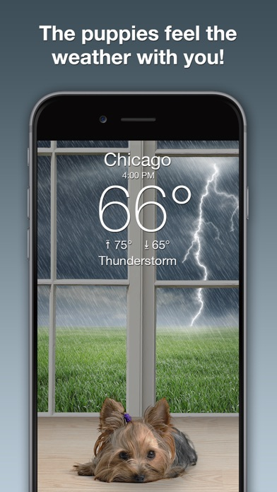 Screenshot for Weather Puppy: Forecast + Dogs in United States App Store