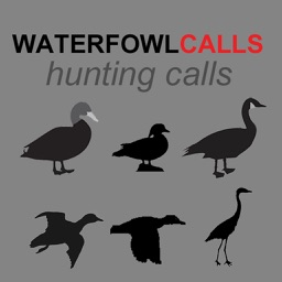 Waterfowl Hunting Calls SAMPLER - The Ultimate Waterfowl Hunting Calls App For Ducks, Geese & Sandhill Cranes