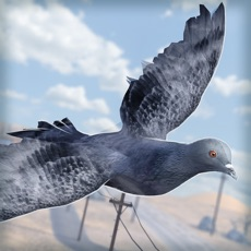 Activities of Bird Survival | Wing Sky Fly Tiny Simulator Game For Free