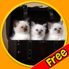 fantastic cats pictures for kids - free icon