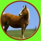 дружественных лошадей для всех детей - бесплатные игры icon