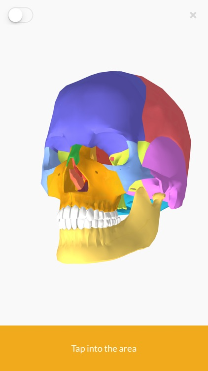 3D Anatomy teachr