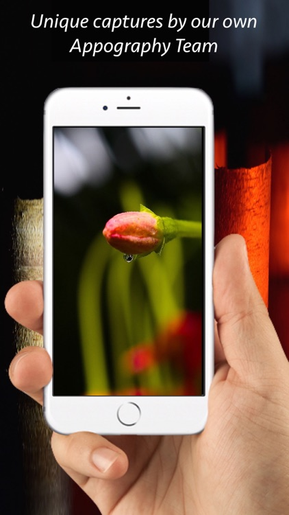 HD Backgrounds Wallpapers - Appography