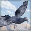 疯狂 小鸟 飞翔 大战 - 酷跑 类 游戏 中文 版 动物园