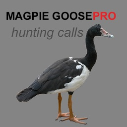 REAL Magpie Goose Calls - Hunting Calls for Magpie Geese - (ad free) BLUETOOTH COMPATIBLE