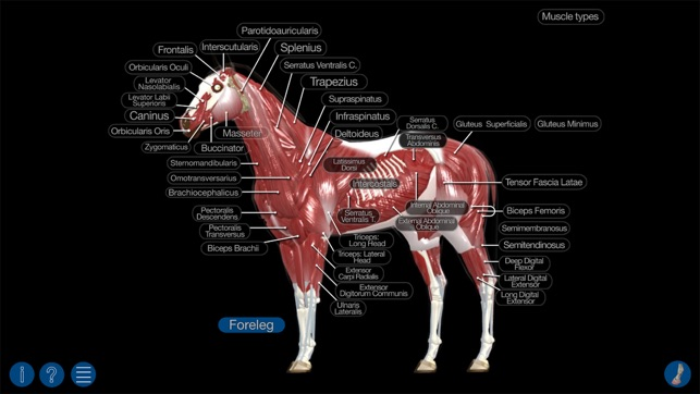Horse anatomy equine 3d on the app store ccuart Images