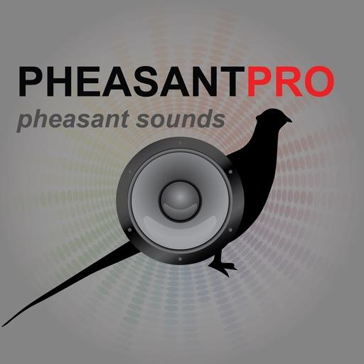 REAL Pheasant Calls Pheasant Hunting Calls