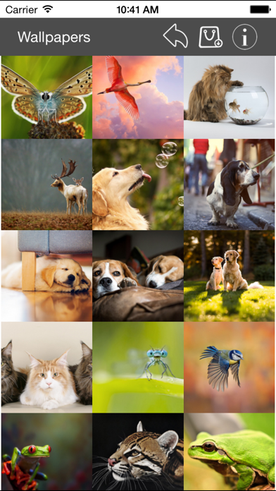 点击获取Wallpaper Collection Animals Edition