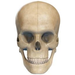 Virtual Reality(VR) Human Skull
