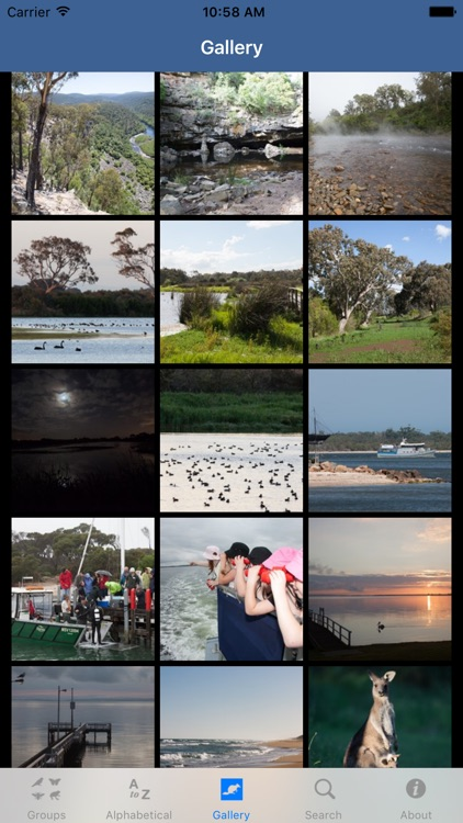 Wildlife Field Guide to Gippsland Lakes screenshot-4