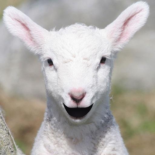 Talking Lamb iOS App