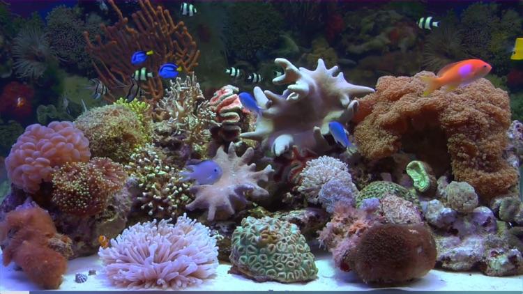 Reef Aquarium - Living Art