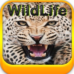 Wild Life Wallpapers -Best HD Wallpapers of Animal World