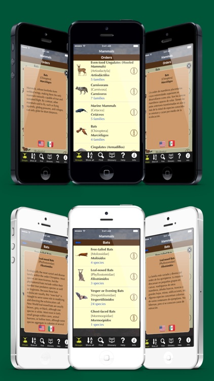 Texas Mammals - Guide to Common Species screenshot-3