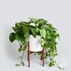 Grow Houseplants Guide-Tips and Beginners - Xi Zhang Cover Art