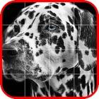 Picross Album - Nonogram icon
