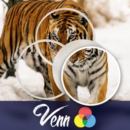 Venn Tigers: Overlapping Jigsaw Puzzles