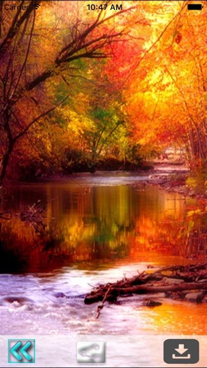 First Day Fall - Autumn HD Wallpapers screenshot-3
