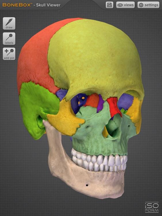 BoneBox™ - Skull Viewer screenshot-3