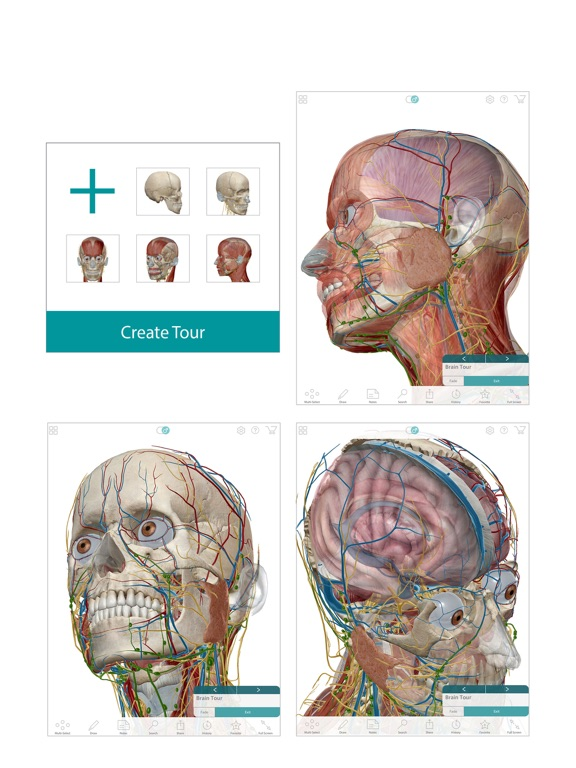Human Anatomy Atlas – 3D Anatomical Model of the Human Body - App ...