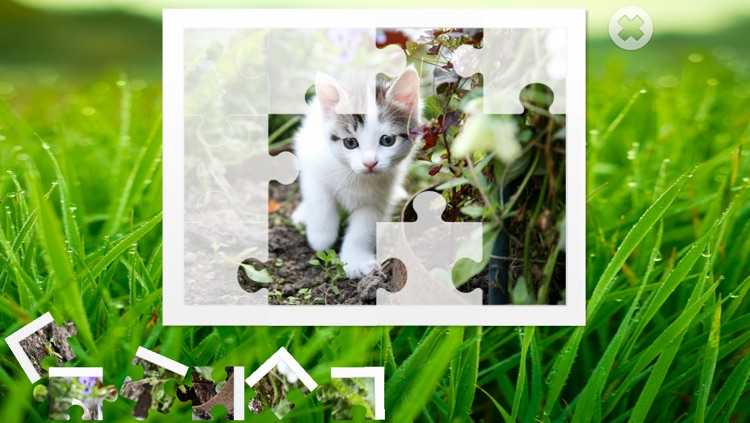 Cats puzzle - fun for kids