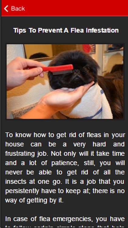 How To Get Rid Of Fleas Guide