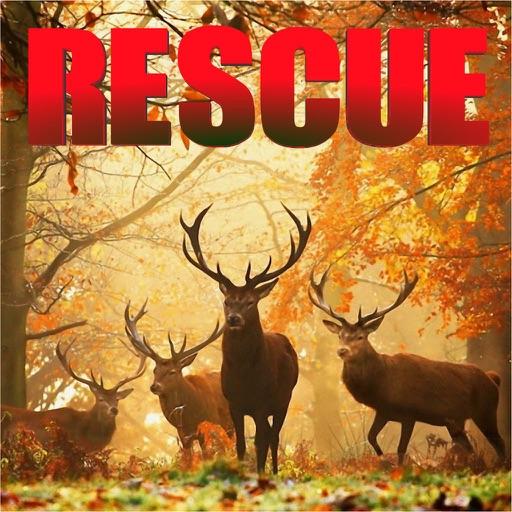 Jungle Animals Rescue