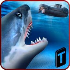 Activities of Shark io