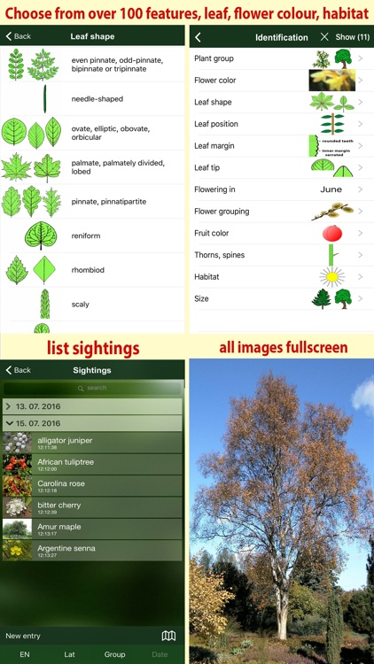 Tree Id USA - identify over 1000 of America's native species of Trees, Shrubs and Bushes screenshot-4