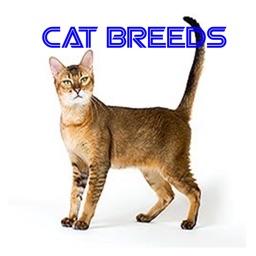 Complete Cat Breeds