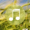 Wind sounds:Calming sounds of nature for relaxation and forest ambience for stress relief Ranking