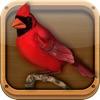 FeederVu - Birds of North America in 3D