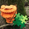 Mushrooms Puzzles Collection
