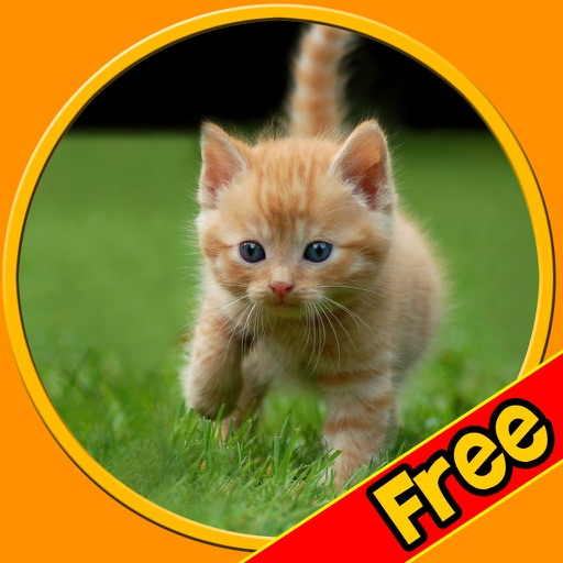 beautiful amazing cats for kids free iOS App