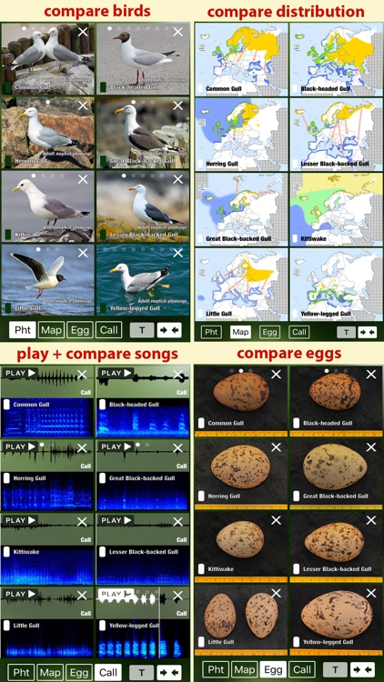 All Birds Sweden - A Complete Field Guide to the Official List of Bird Species Recorded in Sweden screenshot-4